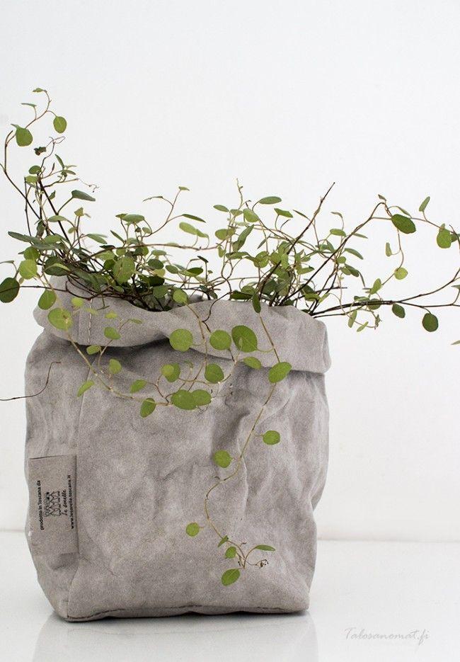 übertöpfe Für Zimmerpflanzen übertopf aus papier flora übertöpfe papier und