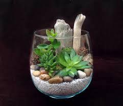Resultat De Recherche D Images Pour Terrarium Galets Plantes