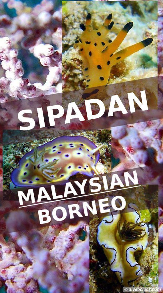Dive Destination: Sipadan, Mabul & Kapalai