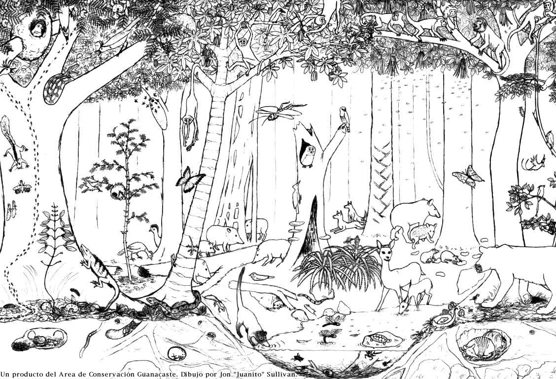 Dibujos de bosques para colorear - Imagui