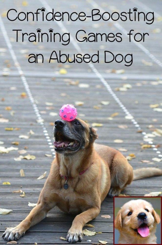 1 Have Dog Behavior Problems Learn About Dog Behavior School Near