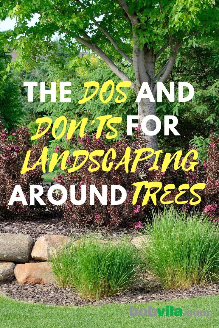 The Dos and Don'ts for Landscaping Around Trees #landscapingtips