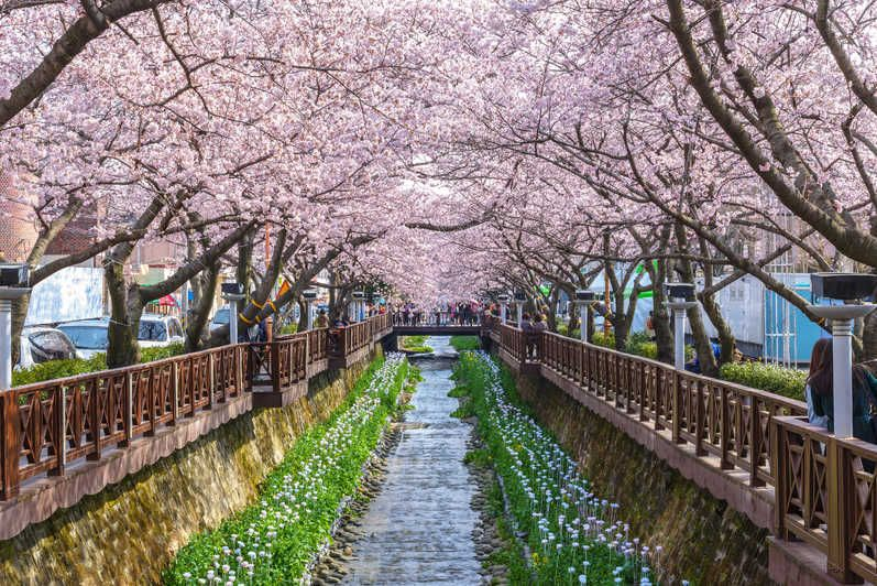 Seoul Spring Cherry Blossom Daytour Most Beautiful Places Beautiful Places South Korea Travel