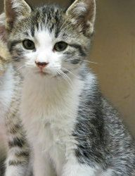 Adopt Popeye on Cats, Kittens, Animal shelter