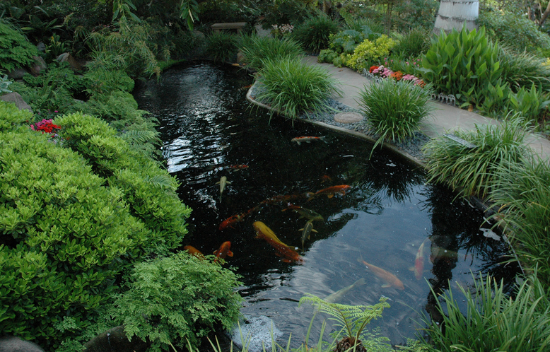 Jul 22 the ins and outs of indoor koi ponds pond and for Indoor koi fish pond