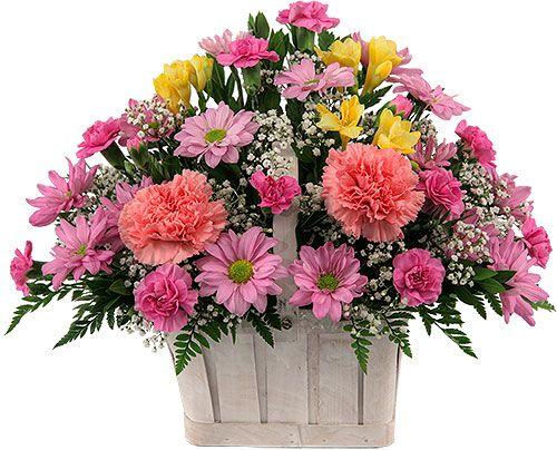 Spring Flowers 1 Bloomin Wild Basket Flower