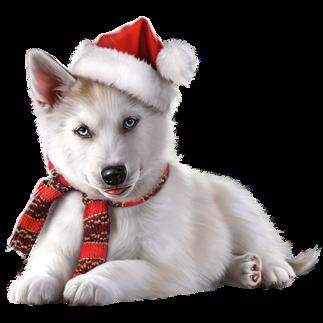 Год Собаки | Щенки, Животные, Собаки