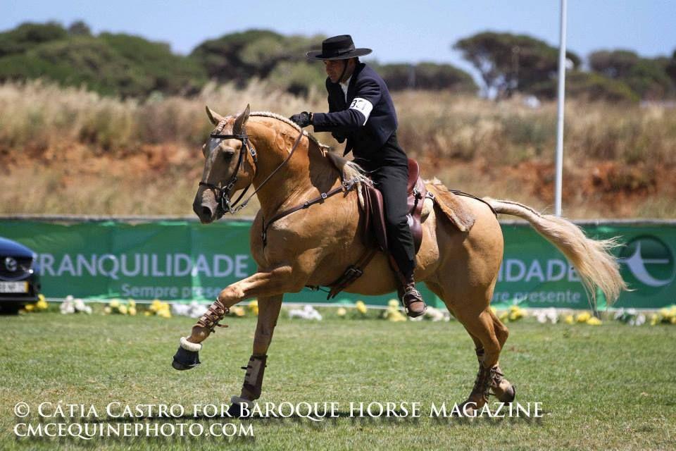 Lusitano - Horse - Trigo Rider - João Duarte Rafael Working Equitation Competition - speed test — with João Duarte Amaro Rafael in Lisboa, Portugal.