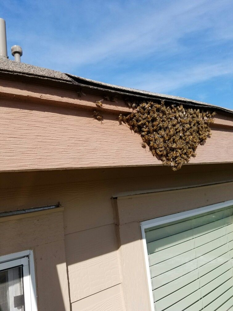 Pin On Bee Swarm