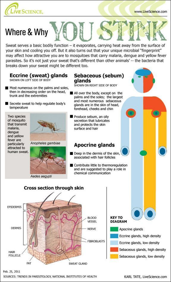 Bugs Love The Way You Sweat Infographic Science Classroom