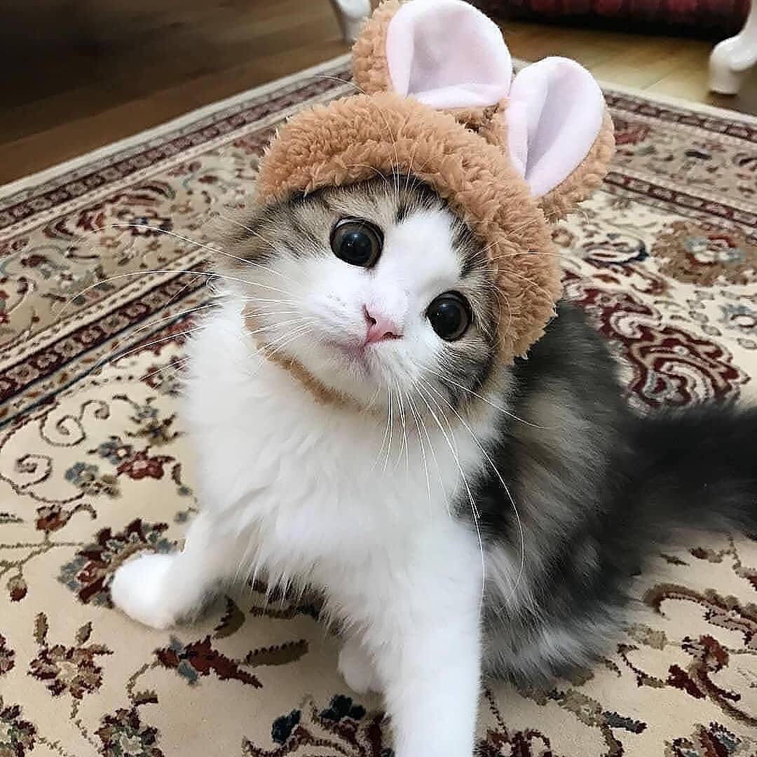 Sweet Cats Of Instagram On Instagram Look At These Cute Bunny Ears Notifications On From Cocolog Cat Kitten Cute Cat Wallpaper Cute Cats Kittens