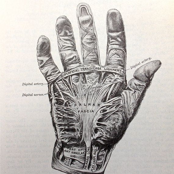 Https Img0 Etsystatic Com 000 0 6539595 Il 570xn 298094560 Jpg Anatomy Art Medical Illustration Medical Drawings