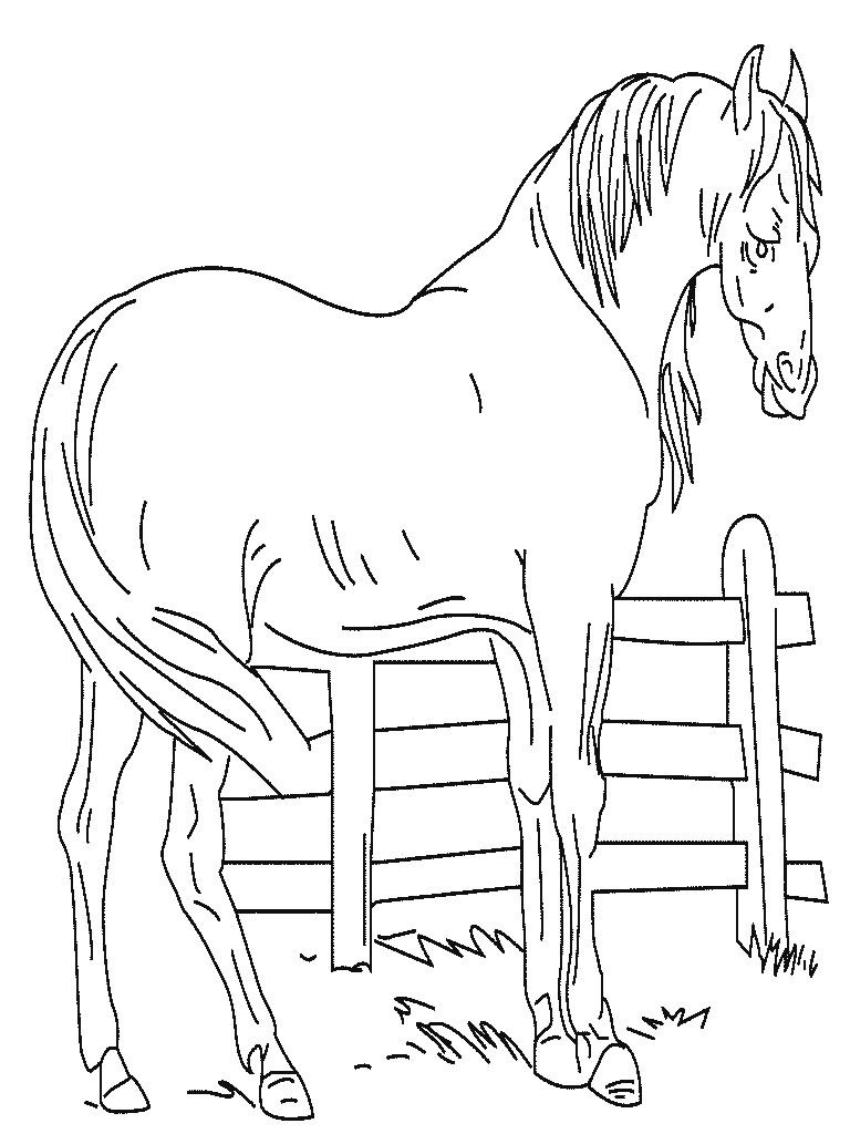 Horse coloring pages lillie pinterest coloring pages animal