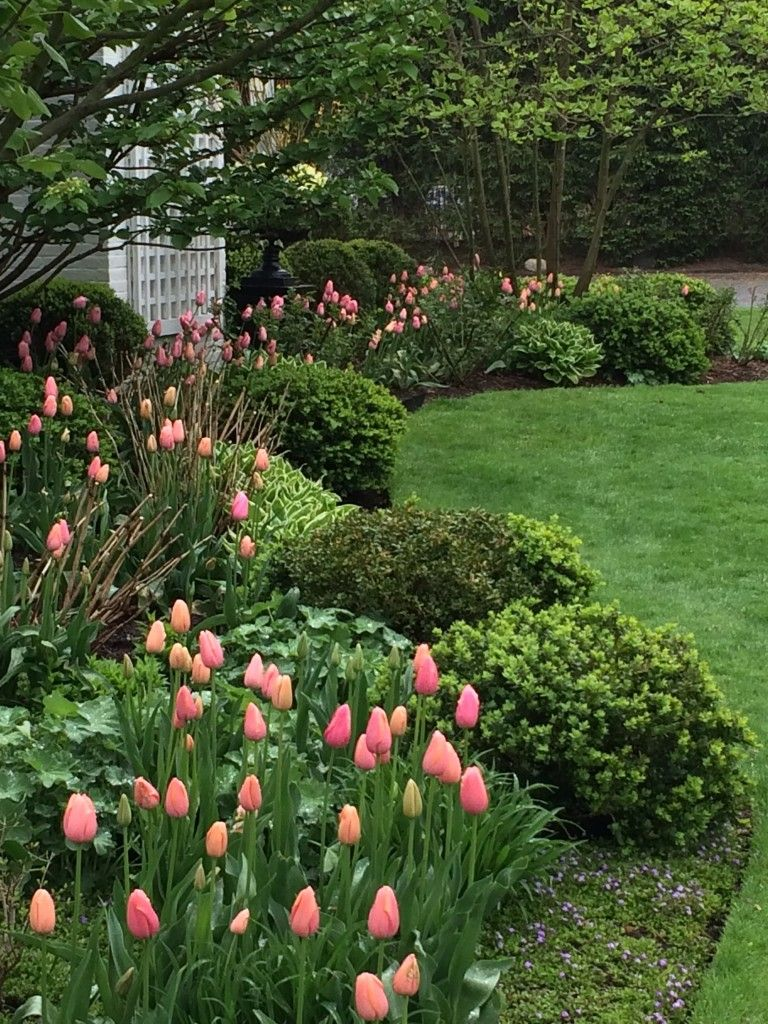 Pretty Pink Tulips Living Giving And Entertaining With Style And
