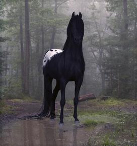 black blanket appaloosa. Just kinda takes your breath away… God's beautiful creation.