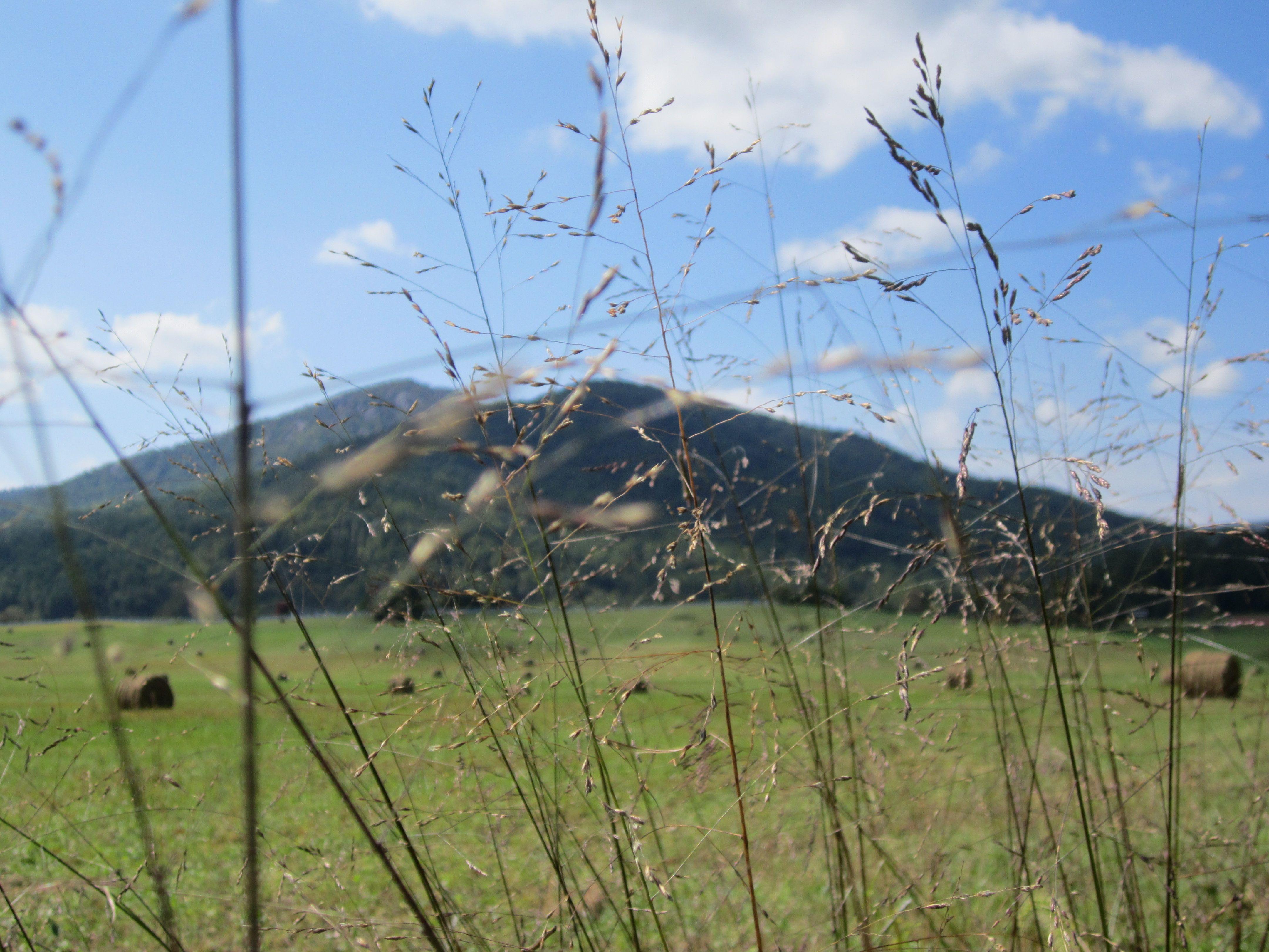 northern Virginia Countryside