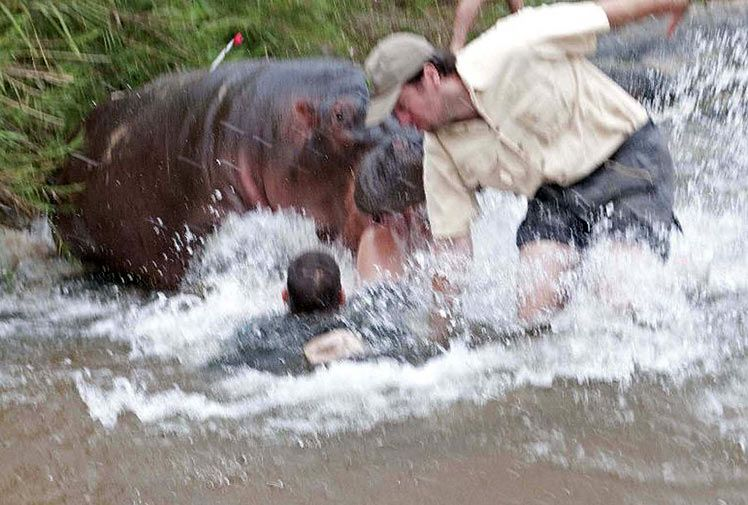 Anaconda Eats Hippo Snake Eats Kid Alive Caught On Tape
