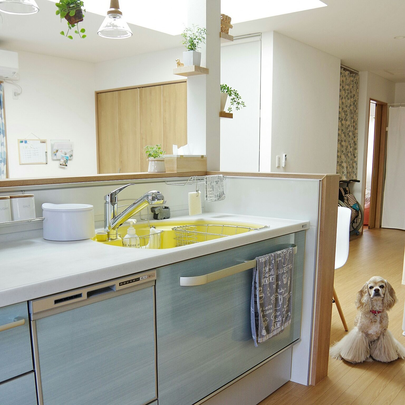 キッチン 平屋 犬と暮らす アメリカンコッカースパニエル トクラス Bb