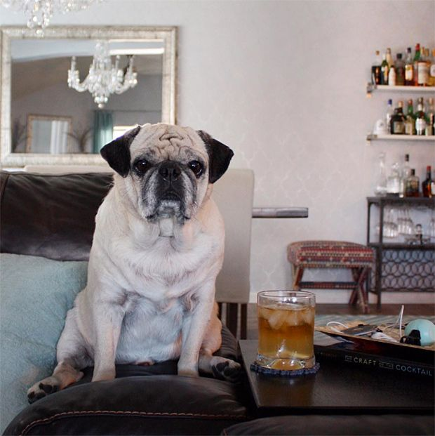 Pets With Great Homes Rocco The Pug Pet Style Pets Pugs