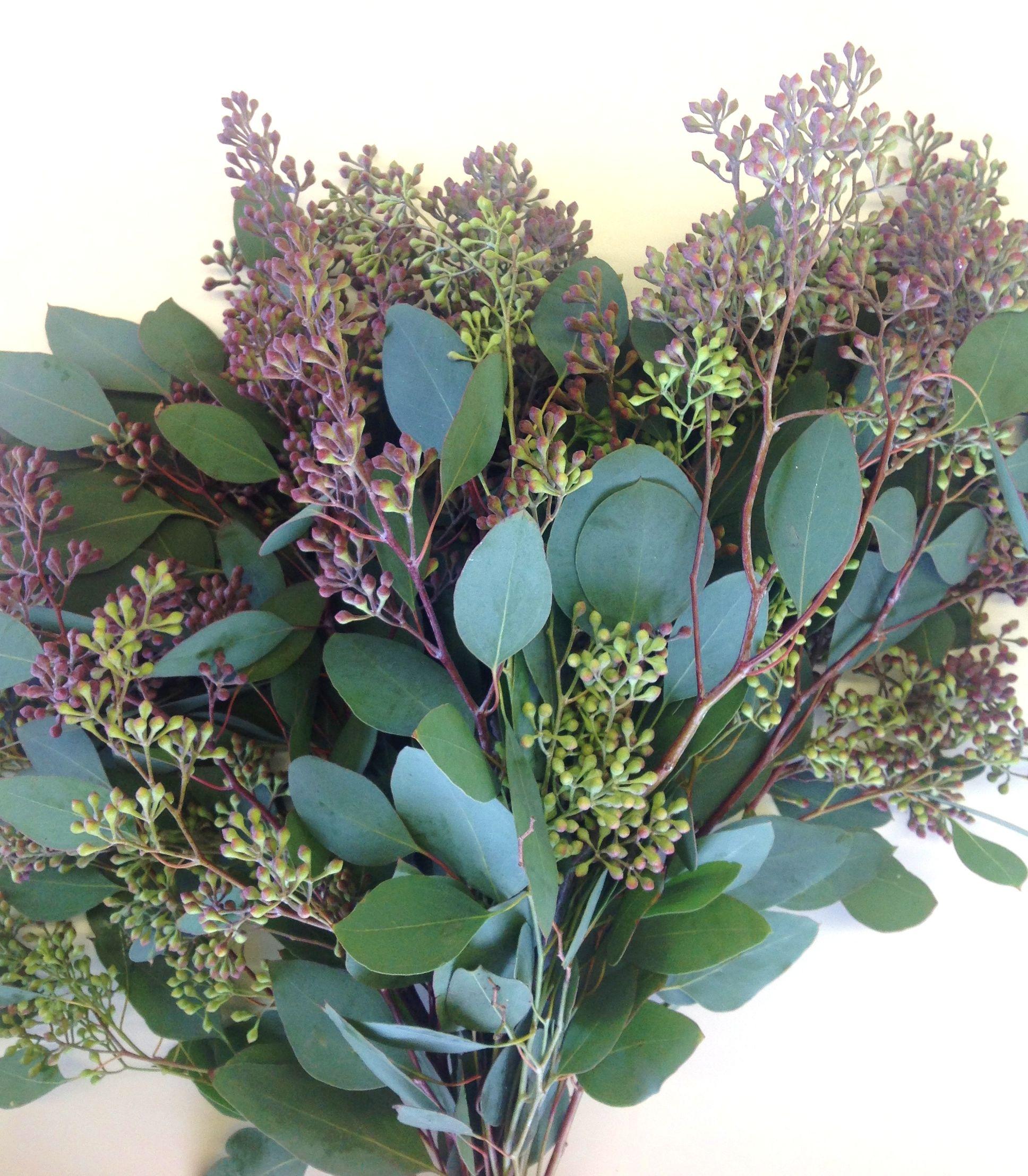Seeded eucalyptus | I Love... | Pinterest