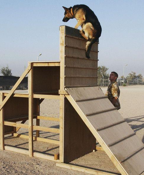 British Army Train Specialist Dog Units In Basra Dog Training
