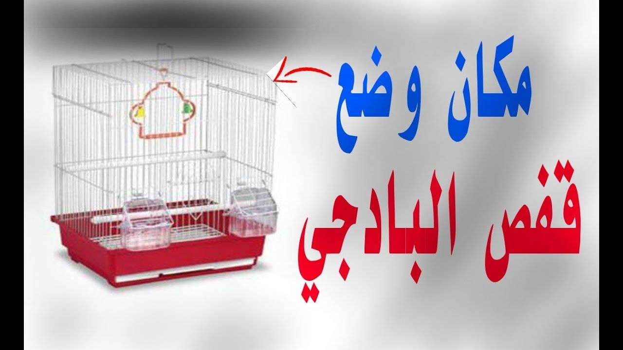 عندما نشتري قفص به طيور البادجي أين نضعه مكرم للبادجي Container Takeout Container Birds