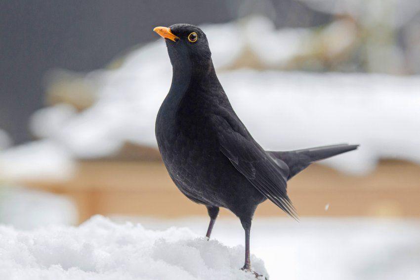 Fotos Vogel Im Winter Der Spiegel Wissenschaft Vogel Im