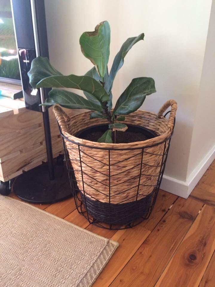 kmart black basket and hacked cane basket