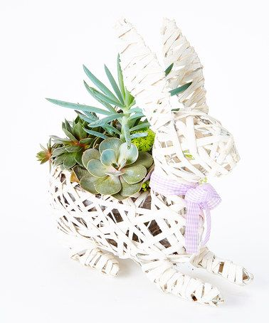 Another great find on #zulily! White Wicker Rabbit Live Succulent #zulilyfinds