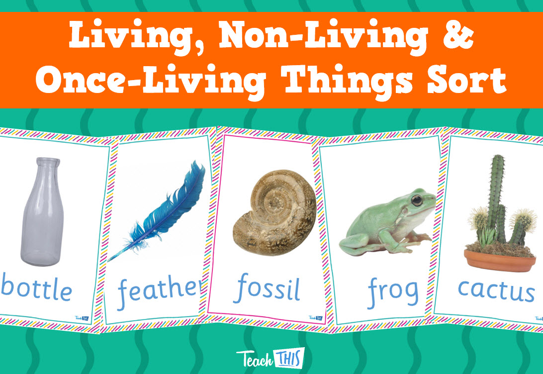 Living Non Living And Once Living Things Sort Printable Picture Theme Flash Cards Classroom Displays Te Classroom Games Teacher Resources Science Biology [ 752 x 1092 Pixel ]
