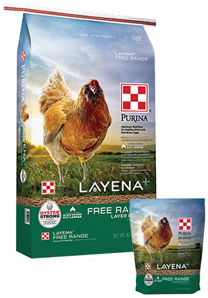 Tips For Quality Eggs Poultry Feed Animal Nutrition Layer Chicken
