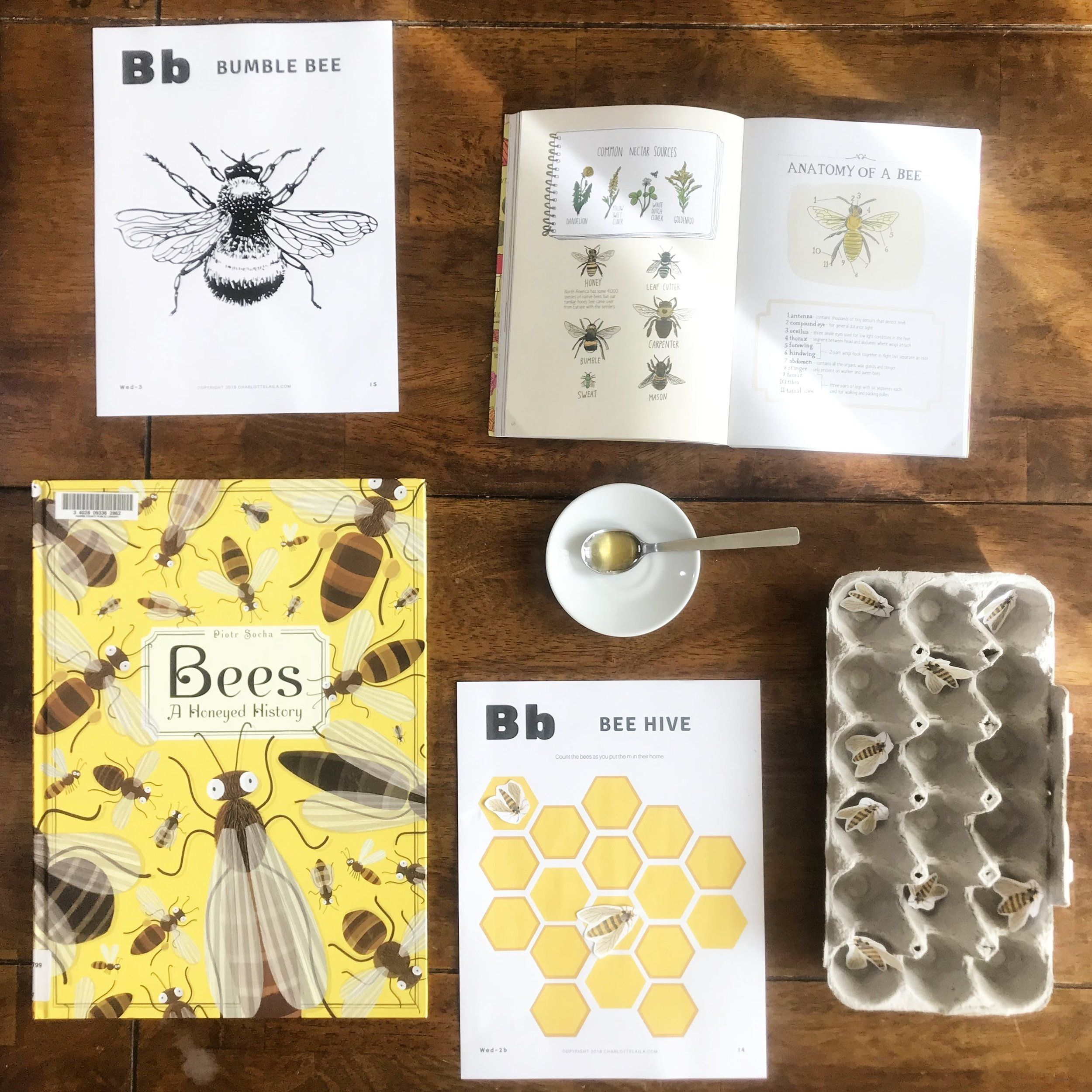 Bumble Bee Workbook