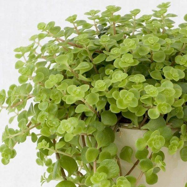 Nursery Indoor Plants Near Me: Pin On Plants N Pots