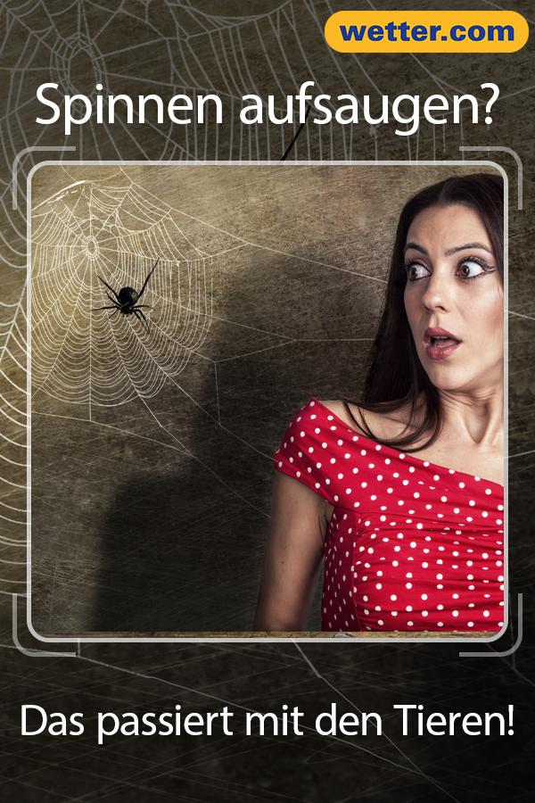Arachnophobie Ist Eine Der Haufigsten Angste Der Menschen Viele