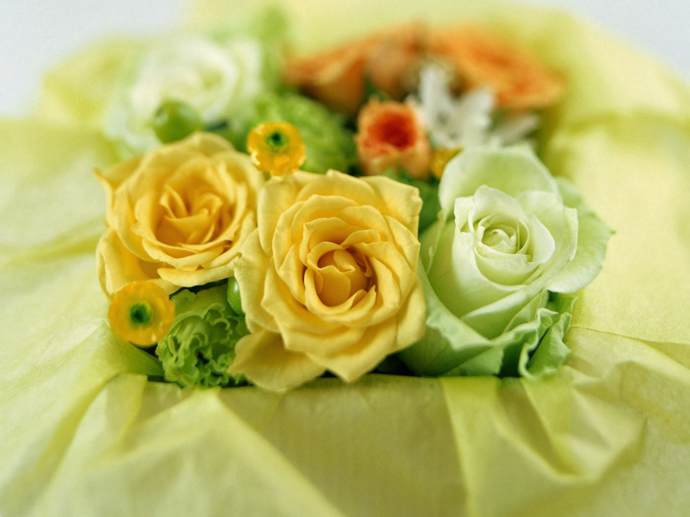 Stunning Flower Wallpaper