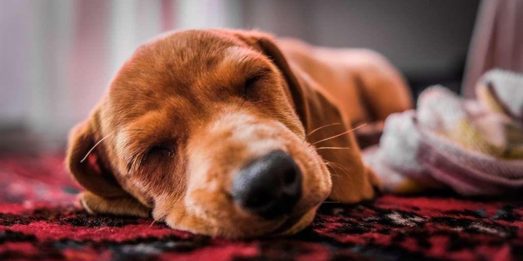 Ihrem tierischen Freund beim Schlafen zuzusehen, kann
