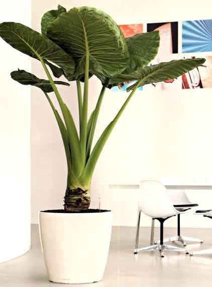 Lechuza Classico Planters 20 Inch (White) #ideas #nature ...