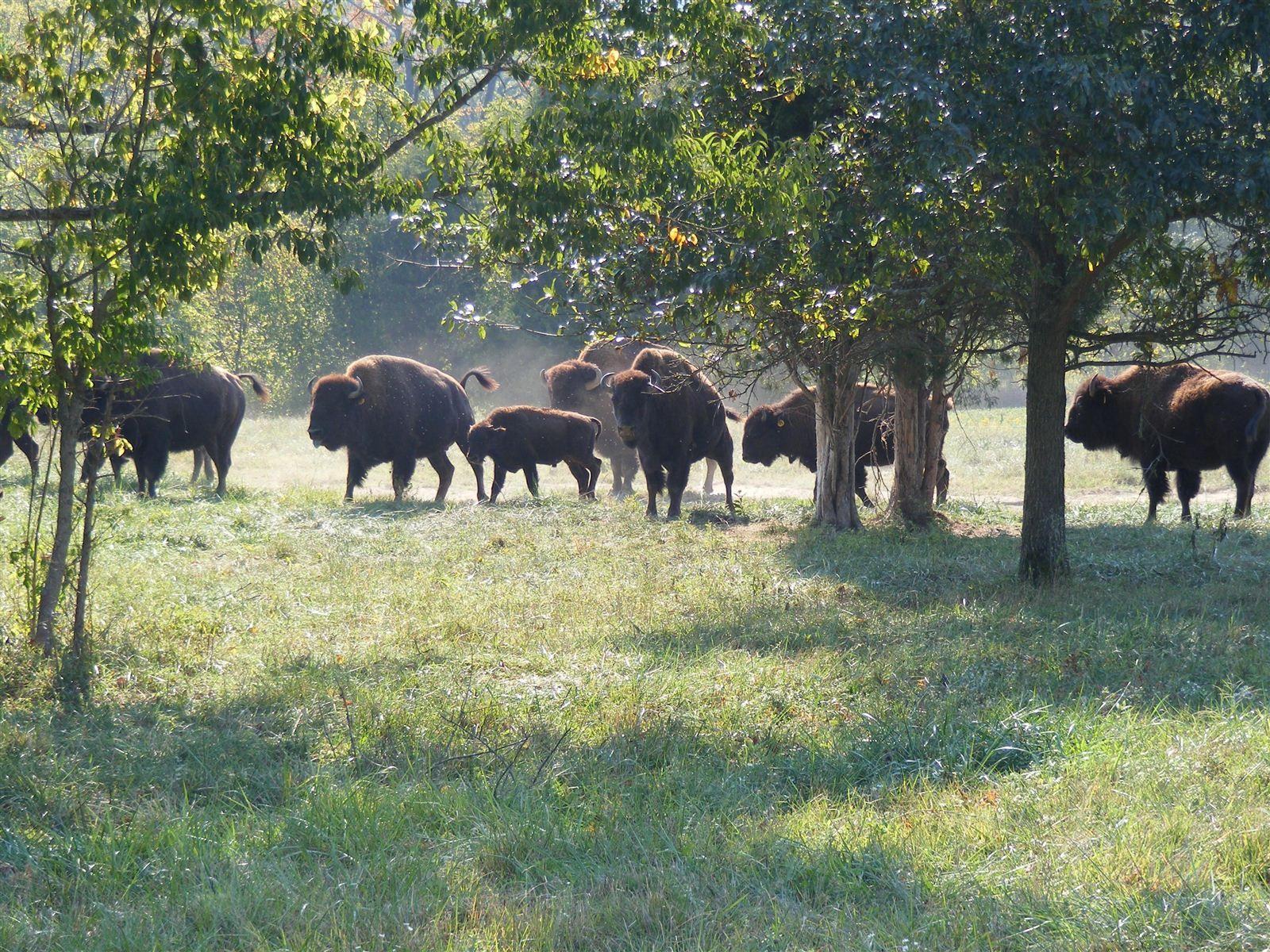 Delirium congratulate, Big bone lick national park explain more