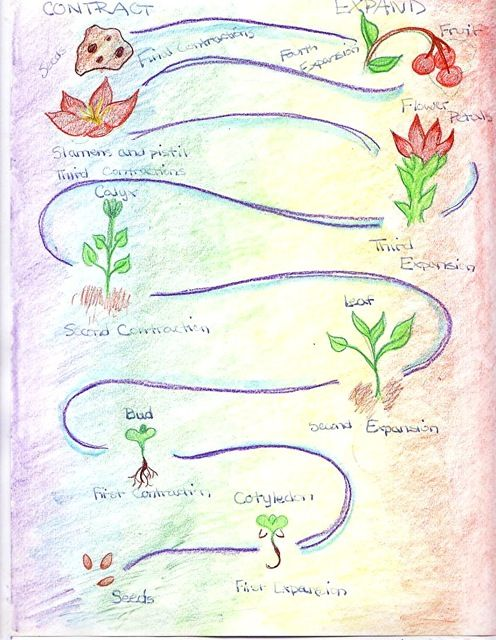 Grade Five Botany | Botany, 5th grades, Botany lessons