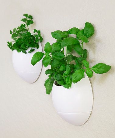 Look What I Found On Zulily Self Watering Herb Wall Planter Set