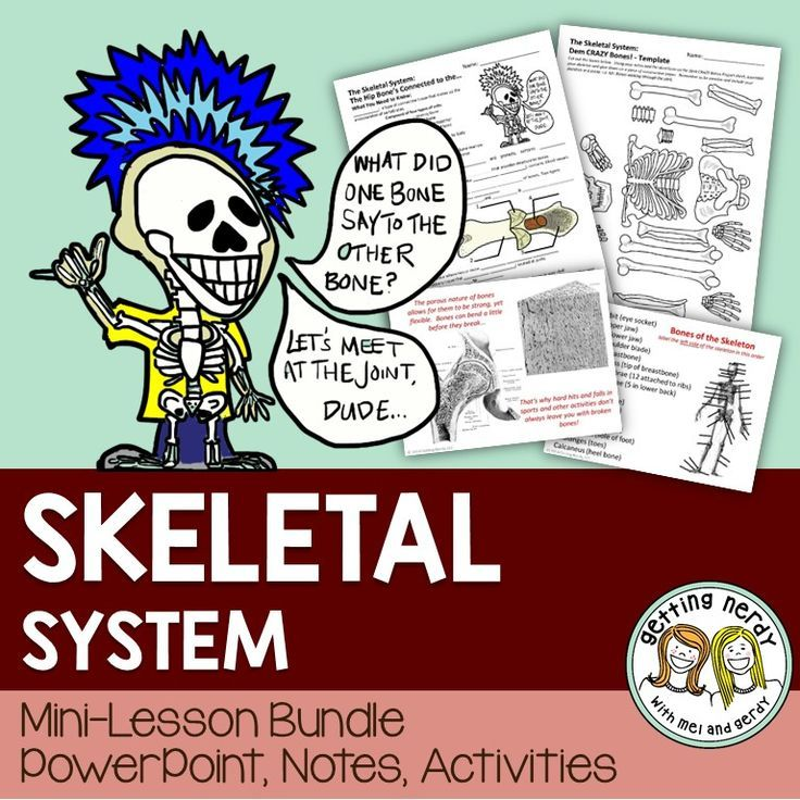 Skeletal system PowerPoint, notes, and build a skeleton project ...