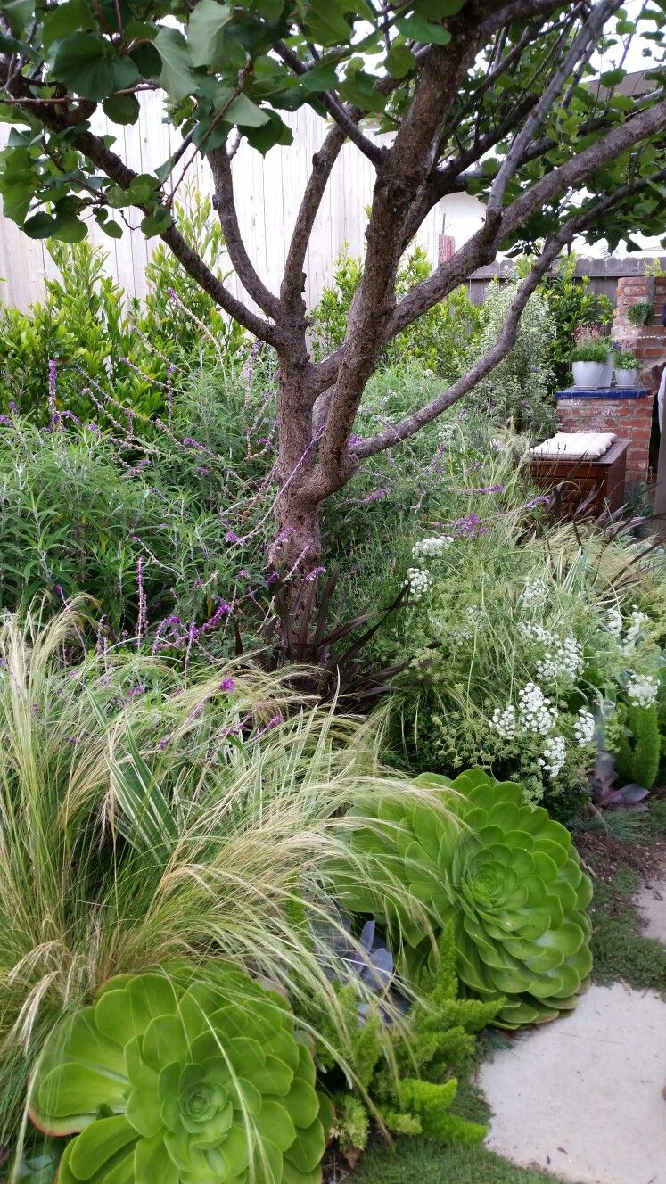 Design By Living Gardens Landscape Design Succulents. Grasses. Perennials.
