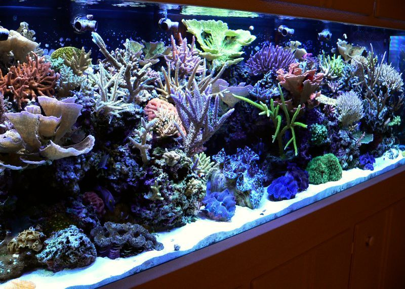 S Quot Under Glass Quot Aquariums Brackish Fresh Reef