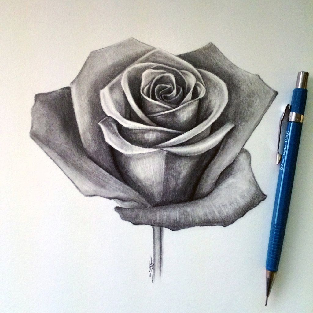 Drawing A Realistic Rose Rose Drawing Lethalchris On ...