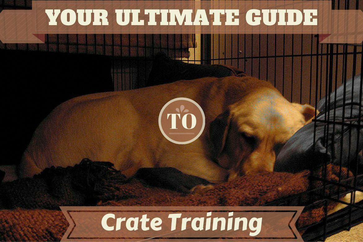 How Do You Deal With Crate Training While Working A Full Time Job