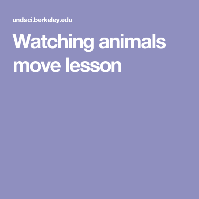 Watching animals move lesson
