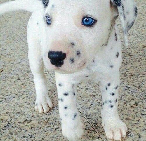Those blue eyes....