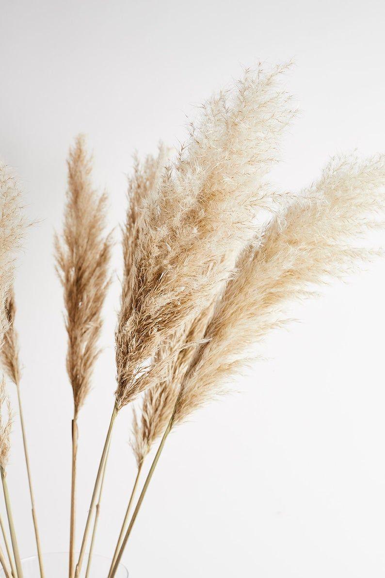 Pampas Grass 120cm
