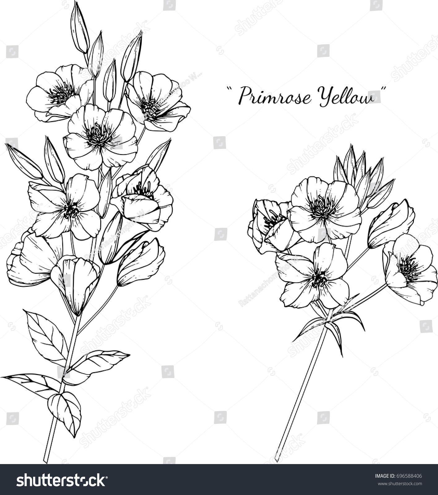 Primrose Illustration On White Background Birth Flower Tattoos Violet Flower Tattoos Flower Drawing