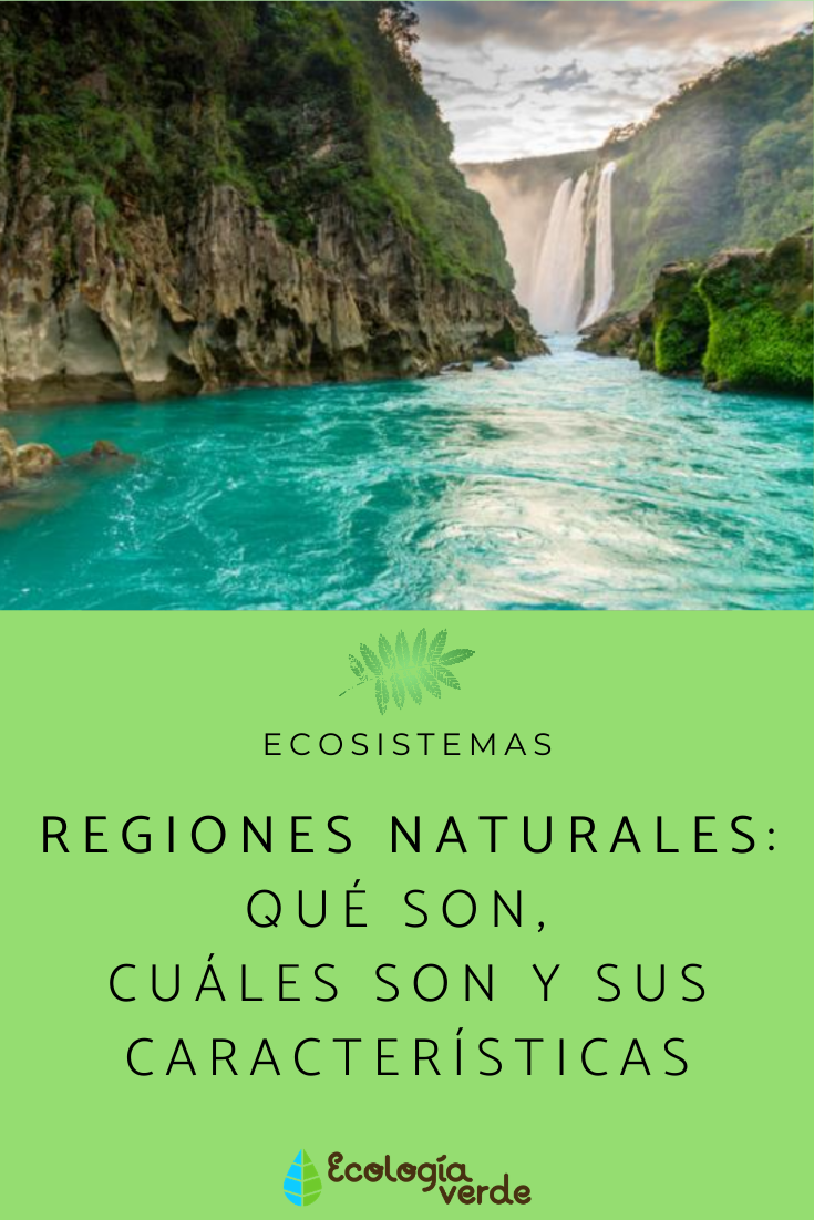 Regiones Naturales Qué Son Cuáles Son Y Sus Características Resumen Ecosistemas Natural Parques Naturales